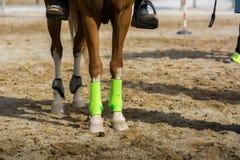 Sluit omhoog van Paard` s Voeten in Groen vóór een Ras bij R worden behandeld dat stock foto's