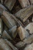 Sluit omhoog van palm Stock Fotografie