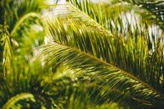Sluit omhoog van palmbladen Stock Foto's