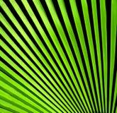 Sluit omhoog van palmbladen op textuurachtergrond Royalty-vrije Stock Foto's