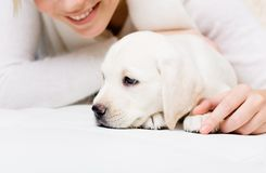 Sluit omhoog van puppy van Labrador liggend op de bank met vrouw Royalty-vrije Stock Foto