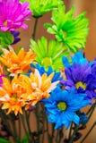Sluit omhoog van purpere fuchsiakleurig groene en blauwe Madeliefjes stock foto