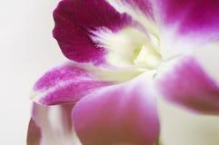 Sluit omhoog van purpere orchid_side Royalty-vrije Stock Foto's