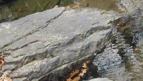 Sluit omhoog van randen van harde rots, eiken bladeren & duidelijk kreekwater onder de Watervallen van de Brijvork op Kampkreek stock footage
