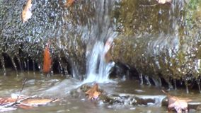 Sluit omhoog van randen van harde rots, eiken bladeren & duidelijk kreekwater onder de Watervallen van de Brijvork op Kampkreek stock video