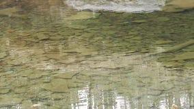 Sluit omhoog van randen van harde rots onder duidelijk kreekwater onder de Watervallen van de Brijvork op Kampkreek stock videobeelden