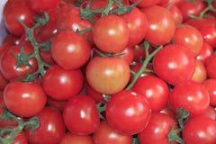 Sluit omhoog van rode kleine tomaten Royalty-vrije Stock Afbeeldingen