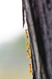Sluit omhoog van rode mieren in aard Stock Afbeelding