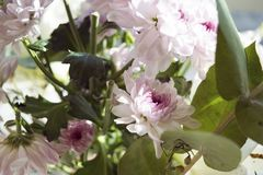 Sluit omhoog van roze bloem op onscherpe achtergrond stock afbeelding