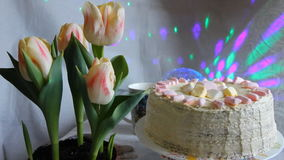 Sluit omhoog van roze gele tulpen of de tulipalente bloeit knoppen, hoofden in tuin van Amsterdam, Holland, Nederland Tulpen stock video
