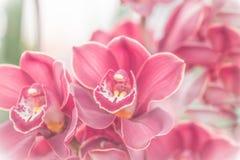 Sluit omhoog van roze orchidee in zachte kleur en onduidelijk beeldstijl Stock Fotografie