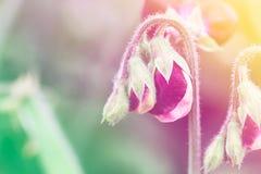 Sluit omhoog van schatbloemen op natuurlijk Royalty-vrije Stock Afbeelding