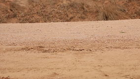 Sluit omhoog van schoenen en benen van Afrikaans kind die aan school lopen stock video