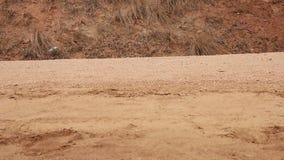 Sluit omhoog van schoenen en benen van Afrikaans kind die aan school lopen stock footage