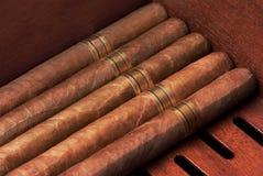 Sluit omhoog van sigaren royalty-vrije stock foto's
