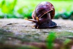 Sluit omhoog van slak, nieuwsgierige slak die voor voedsel op steenweg kruipen stock fotografie