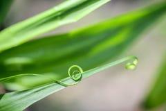 Sluit omhoog van spiraalvormig groen blad Stock Afbeelding