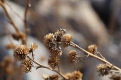 Sluit omhoog van Stekelige bloem Stock Afbeelding