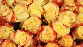 Sluit omhoog van tan rozen stock videobeelden