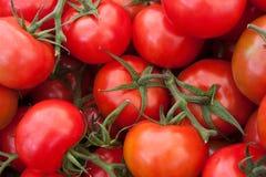 Sluit omhoog van tomaten Stock Afbeeldingen