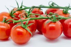 Sluit omhoog van tomaten op de wijnstok Royalty-vrije Stock Fotografie
