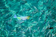 Sluit omhoog van tropisch water in de oceaan of het zwembad, Stock Afbeelding