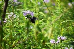 Sluit omhoog van tuinbloemen met vlinder stock foto's