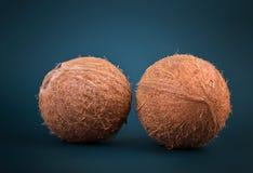 Sluit omhoog van twee gehele en verse kokosnoten op een donkerblauwe achtergrond Exotisch kokosnotenhoogtepunt van vitaminen Een  Royalty-vrije Stock Foto's