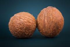 Sluit omhoog van twee gehele kokosnoten op een donkerblauwe achtergrond Exotisch kokosnotenhoogtepunt van vitaminen Een gehele en Royalty-vrije Stock Foto
