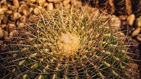 Sluit omhoog van Vatcactus met stekelige doornen Royalty-vrije Stock Foto