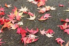 Sluit omhoog van vele gele rode dode boombladeren liggend op natte vloerstraat op een regenachtige dag Royalty-vrije Stock Afbeelding
