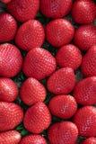 Sluit omhoog van vele verse rijpe aardbeien Stock Foto