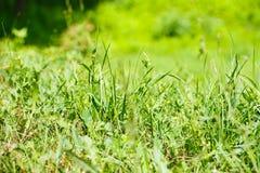 Sluit omhoog van vers dik gras Stock Foto's