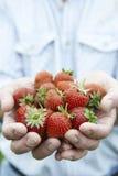 Sluit omhoog van vers Geplukt van de Mensenholding Aardbeien royalty-vrije stock afbeeldingen