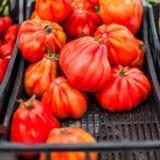 Sluit omhoog van verse organische tomaten bij openluchtlandbouwersmarkt Hij Royalty-vrije Stock Afbeelding