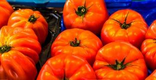 Sluit omhoog van verse organische tomaten bij openluchtmarkt Royalty-vrije Stock Afbeelding