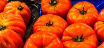 Sluit omhoog van verse organische tomaten bij openluchtmarkt Royalty-vrije Stock Afbeeldingen