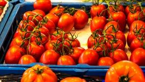 Sluit omhoog van verse organische tomaten bij openluchtmarkt Stock Foto