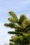 Sluit omhoog van verticale takken van groene spar tegen blauwe hemel, stock foto