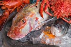Sluit omhoog van vissen op vertoning in een vissenmarkt Stock Afbeeldingen