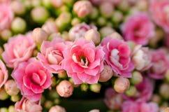 Vlammende bloem Katy royalty-vrije stock foto