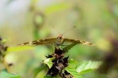 Sluit omhoog van vlinder stock afbeelding