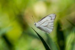 Sluit omhoog van vlinder Royalty-vrije Stock Foto's