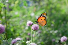 Sluit omhoog van Vlinder op bloem stock foto's