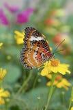 Sluit omhoog van vlinder op een gele bloem Royalty-vrije Stock Foto's