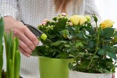 Sluit omhoog van Vrouw die Gele Rose Houseplant With Spray water geven royalty-vrije stock foto's