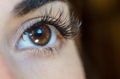 Sluit omhoog van vrouwelijk bruin oog zonder omhoog maken, lang zwepen en oog stock afbeelding
