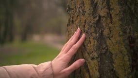 Sluit omhoog van vrouwelijke hand wat betreft een boomboomstam in het bos stock footage