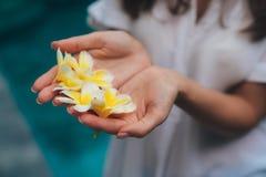 Sluit omhoog van vrouwelijke handen met witte en gele plumeria, frangipanibloem in palmen royalty-vrije stock fotografie
