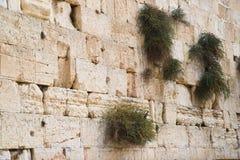 Sluit omhoog van Westelijke muur. Jeruzalem. Israël. Royalty-vrije Stock Foto's